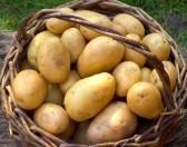 Białoruś zakazała importu ziemniaków z Ukrainy