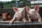 Ukraina zakazała wwozu mięsa z Białorusi