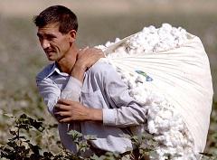 Biznesmeni nie będą musieli zbierać bawełny