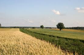Kazachstan stawia na rolnictwo