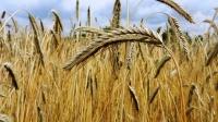 Ukraina spodziewa się zwiększyć eksport zboża o 45 milionów ton