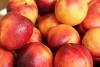 Gruzja wyeksportowała ponad 23 tysiące ton brzoskwiń i nektaryn