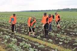 Ministerstwo Rolnictwa Rosji chce przyciągnąć pracowników sezonowych z Tadżykistanu
