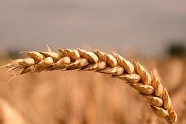 Łotewski rząd oferuje wsparcie krajowym przetwórcom żywności